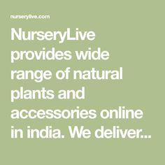 NurseryLive provides wide range of natural plants and accessories online in india. We delivers nursery plants, seeds, bulbs, pebbles, pots & planters across all major cities in India. Plant Nursery, Large Plants, Medicinal Plants, Accessories Online, Trees To Plant, Vegetable Garden, Bulbs, Planter Pots, Seeds