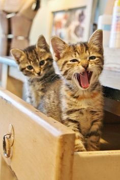 Kittens-in-a-Drawer by viva_victoria, via Flickr