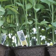 What Vegetables to Plant in August | eHow