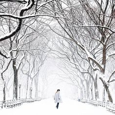 10 most photographable spots in nyc . central park during a snowstorm. Credit: Jinna Yang