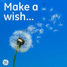 What is your biggest wish for the environment?