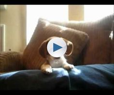 Some of the cutest and funniest puppies and dogs from the web in no particular order PLEASE THUMBS UP! Leave suggestions for more cute animal videos in the comments and rank which video you think is the cutest and funniest.