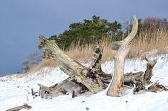Winterurlaub in Dänemark hier günstig buchen: http://www.poolhaeuser-daenemark.de