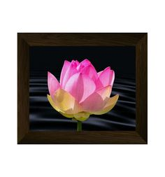 lotus flower, flower print, floral wall art, nature poster, lotus printable artwork, nature photography, botanical digital download di AlemiPrints su Etsy
