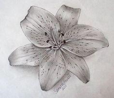 Sketch for lily tattoo Trendy Tattoos, Cute Tattoos, Beautiful Tattoos, Flower Tattoos, New Tattoos, Ribbon Tattoos, Butterfly Tattoos, Tiger Lily Tattoos, Tattoos Skull