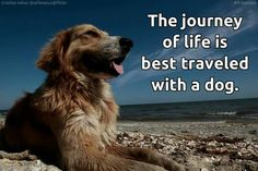 The journey of life is best traveled with a dog.