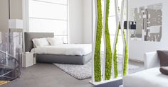 5 Eco-Friendly Home Decoration Ideas with Moss Wall Art