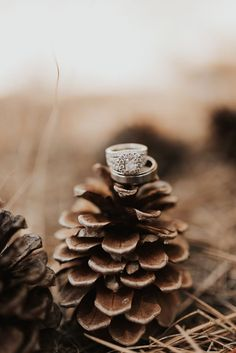 Detail ring shot wedding photography pinecone and wedding ring details