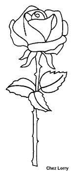 tekening roos - Google zoeken
