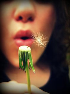 Dandelion | Flickr - Photo Sharing!