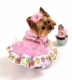 It's my birthday!! Don't I look so beautiful? www.teacuptutucharm.com xoxo #love #celebration #birthday #pink #fashion #teacuptutucharm #pamperedpets #tutu #fancy