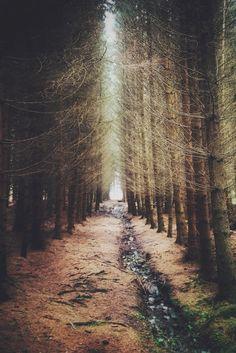 Forest path Scotland