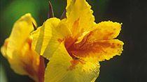 Madeiran kukkaismatka | Aktiivilomat | Tjäreborg  #munloma