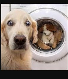 Funny Dog Memes, Funny Dogs, Mom Funny, Funny Facial Expressions, Dog Wash, Real Dog, Funny Dog Pictures, Sleeping Dogs, Training Your Dog
