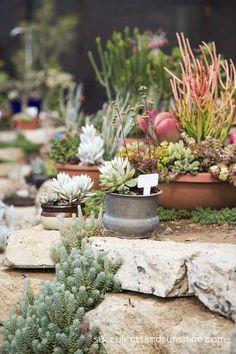 Succulent Arrangements at Waterwise Botanicals - www.succulentsandsunshine.com