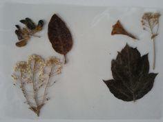 Moth, Insects, Christmas, Animals, Navidad, Yule, Animales, Animaux, Xmas