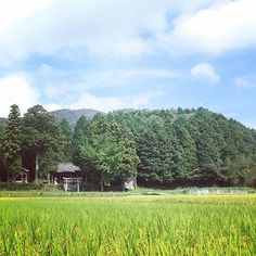 【kic8432】さんのInstagramの写真をピンしています。《鎮守の森。稲刈りも近し。  #空 #青空 #雲 #農村 #林 #神社 #鳥居 #風景 #里山 #旅 #田んぼ #田舎 #景色 #緑 #稲穂 #大分 #sky #clouds #bluesky #countryside #countryroad  #green #landscape #woods #japaneseshrine #travel #village #oita #japan #ig_japan》