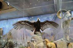 #Travel #tour #Darwin #Museum (14)