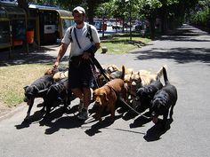 Argentina - Buenos Aires, dog walker, via Flickr.