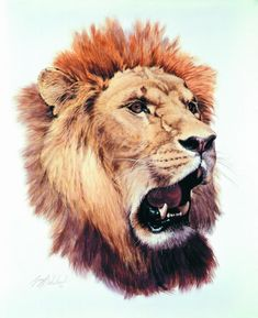 Wildlife Artist Guy Coheleach is a master at both realistic and impressionistic wildlife art. Nature art from big cats to birds of prey, Guy Coheleach's wildlife art is exceptional. Big Cats Art, Cat Art, African Paintings, African Art, Colored Pencil Techniques, Lion Art, Wildlife Art, Painting Inspiration, Lions