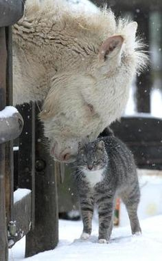 Horse and cat share a tender moment as the winter snow gently falls.