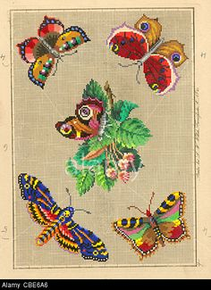 Berlin Wool Work Pattern Of Moths And Butterflies Stock Photo, Picture And Royalty Free Image. Pic. 41494270