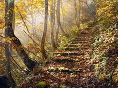 Beautiful Paths to Sunshine | sunny, woodland path runs uphill through colorful trees