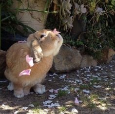 """omgbunnyrabbits: """" Pretty bunny playing with flower petals. """""""