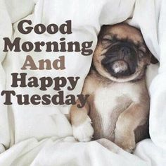 Cute Dog Tuesday Meme Humor 100 Funny Tuesday Memes, Pictures & Images for Motivation Tuesday Quotes Good Morning, Happy Tuesday Quotes, Good Morning Quotes For Him, Morning Memes, Good Morning Funny, Its Friday Quotes, Friday Morning, Happy Quotes, Sunday