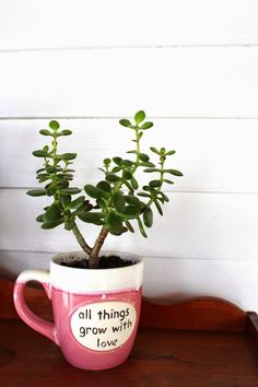 Make Grow Do : Caring for Jade Plants