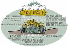 Rain garden : une alternative au bassin avec les poisson ! Plus simple à mettre en place...