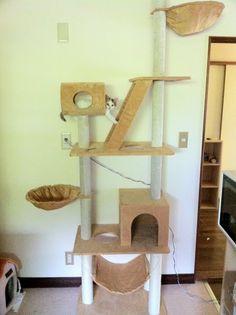 Cat jungle gym #neko #cat