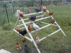 Chicken teepee