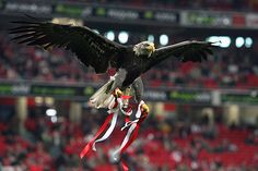 Risultati immagini per benfica Real Madrid, Benfica Wallpaper, Sports Clubs, Colorful Wallpaper, Bald Eagle, Football, Soccer, App, Twitter
