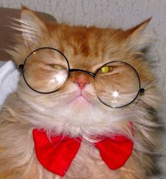 - Cute Cats Wearing Glasses  <3 <3