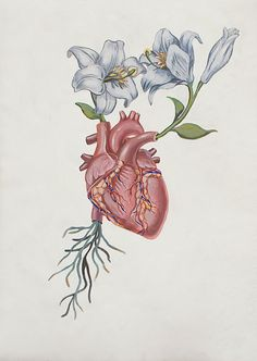 anatomical heart and flowers. I found this drawing on pinterest months ago and I got it as a tattoo on my left side ribs and got stitches on the aorta for my grandma grandma! I love this so much and its so beautiful<33333
