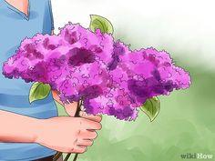 Image titled Grow Lilacs Step 1