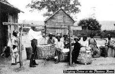 Weighing cotton at the planter's home - Jefferson County, Florida Old Florida, Vintage Florida, Monticello Florida, Jefferson County, Southern Style, Genealogy, Spinning, Vintage Photos, Cities