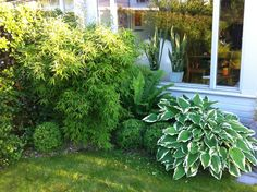 Lotta InsideOut: Trädgårdsinspiration