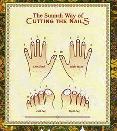 The Sunnah way of cutting the nails. Islam - Crazy islam - everything is physical rule right down to cutting nails. Islam Hadith, Islam Muslim, Allah Islam, Islam Quran, Duaa Islam, Quran Quotes Inspirational, Islamic Love Quotes, Muslim Quotes, Religious Quotes