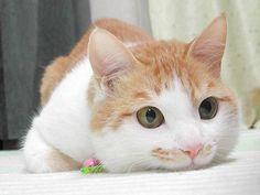 ネコ可愛い~!ってなる画像 | ラジック