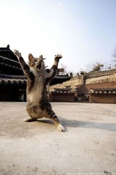 Kung Fu Cat...need to train my cats to do this!