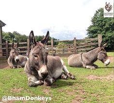 Embedded image via Twitter courtesy of the Donkey Sanctuary