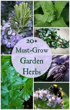 20+ Must Grow Herbs for Your Garden - If you're planning an herb garden here are some plants you won't want to miss!: