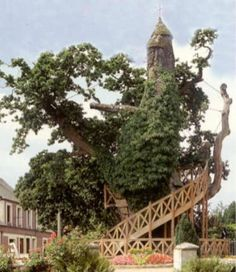 Fancy Discover Le Ch ne Chapelle The Chapel Oak in Allouville Bellefosse France Two small chapels housed inside an ancient tree