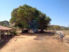 Fazenda de 23 alqueires goianos, possui 3 casas, quintal com bastante variedade de frutas,  curral, rica em água, córrego grande passando no meio dela, duas represas, pasto formado, toda cercada no arame liso.  6 km de estrada de chão. Fica a 95 km de Anápolis , 145 km de Goiânia e 130 km de Brasília (aproximadamente). Falar com Laesse Junior corretor de imóveis creci 22393 Fones: (62) 99245-6963 whatsapp / 98214-9218 / 99821-1487 www.candidoeoliveira.com.br
