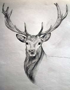 Deer tattoos are loved by many people. In terms of placement, animal tattoos could be inked on the back, chest, limbs, etc. Here are a few realistic deer tattoo designs worth considering. Sketch Art, Drawing Sketches, Drawing Ideas, Deer Sketch, Sketching, Sketch Ideas, 3d Drawings, Tattoo Drawings, Tattoo Sketches