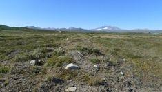 fjellplanter bilder - Google-søk Country Roads, Mountains, Nature, Travel, Naturaleza, Viajes, Destinations, Traveling, Trips