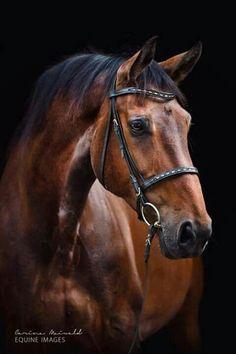 Beautiful Horse Pictures, Most Beautiful Horses, Pretty Horses, Horse Love, Animals Beautiful, Bay Horse, Horse Portrait, Majestic Horse, Horse Drawings