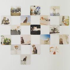 New magnets are here & they are purrfect.  Thx @cheerz #luckythecat #charliethecat #love #cute #catsofsalzburg #unterfoehring #germany #cat #cutecatcrew #ilovemypet #catlovers #lovekittens #instapet #catsagram #kitten #kitty #catstagram #kittycat #catsofinstagram #ilovemycat #catlove #catoftheday #furry #cats_of_instagram #cats #catlife #katze #katzenliebe #instacat_meows #cheerz